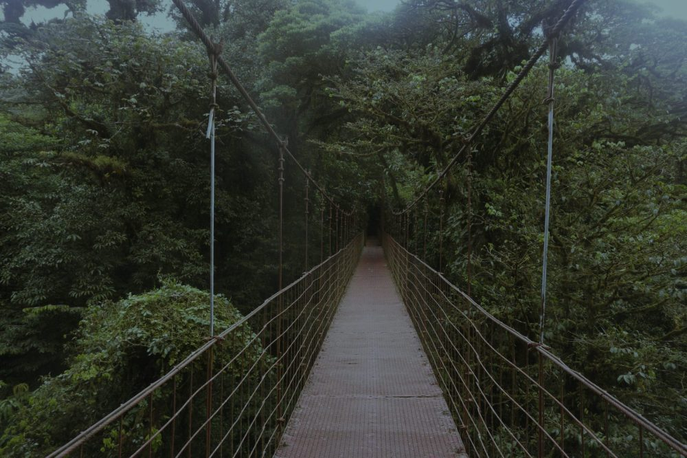 Monteverde Cloud Forest Night Hike